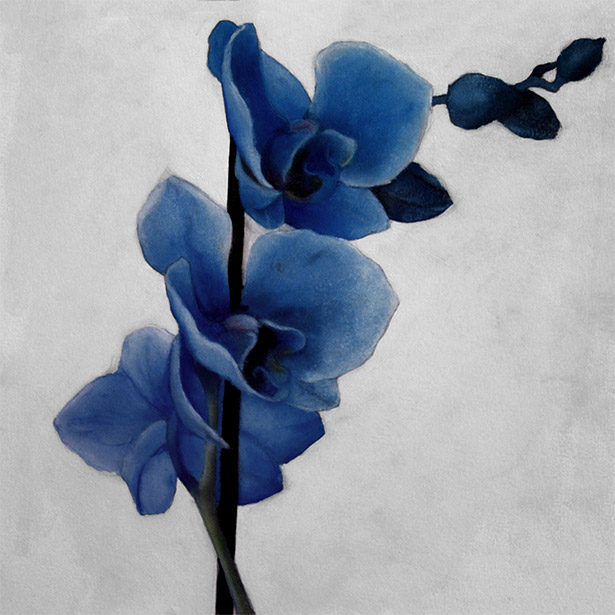 Blue Orchid Oil Painting By Alexander Hofstetter